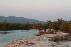 Mangroves at Dawei SEZ small port. By Ashley Scott Kelly, 2017.