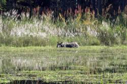 Rhinoceros in Chitwan National Park. By Ashley Scott Kelly, 2016.