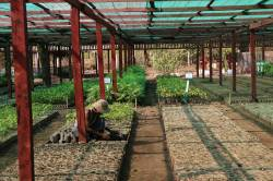 Tanintharyi Nature Reserve Project (TNRP) Michaunglaung Nursery. By Dorothy Tang, 2015.